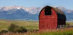 Barn Against the Bridger Mountains (Kim Tashjian) Tags: barn bridger mountains montana summer