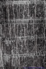 Texture 01 (Nicky Highlander Photography) Tags: barbados caribbean westindies saintpeter polomargardens backyard abstract outsidethebox smooth texture blackandwhite monochrome fineartphotography series barbadosphotographicsociety fieldtrip tree bark trunk old tropical flora photoessay photojournalism documentary editorial nikon d5200 project videographer barbadian nature