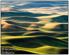 Amber Waves of Grain, From Sea to Shining Sea (zen3d ☯) Tags: palouse grain hills rollinghills goldenhour texture