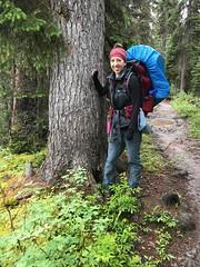 Engleman Spruce - est. 220 years old - Iceline Trail - Yoho National Park (daviddodge2002) Tags: park mountains bc hiking rocky national glaciers yoho iceline daviddodge lindseydodge🐘