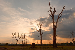 Near to far (unsharptooth) Tags: sunset neakpoan angkorarchaeologicalpark cambodia siemreap goldenhour landscape landscapephotography landscapes nikon d610 nature naturallight ngc