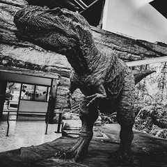 T-Rex (ber52) Tags: newmexicomuseumofnaturalhistoryandscience abq albuquerque dinosaur trex