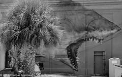 Waiting for a Snack.jpg (Thomas Gremaud) Tags: backalley film shark palm juxtaposition stpetersburgfl mural humor publicart 35mmfilm