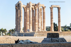 Snoozing at the Olympian Temple of Zeus (ArmanWerthPhotography) Tags: armanwerthphotography temple athens greece templeofzeus cat sleeping travel