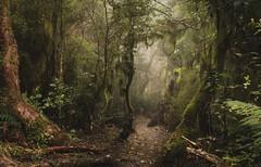 Forest above Akaroa.NZ (ndoake) Tags: