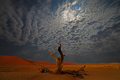 Desert Tree (HWHawerkamp) Tags: namibia sossusvlei tree dead desert dunes clouds sky travel colours