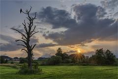 Abendstille (Robbi Metz) Tags: germany bavaria stauden augsburgwestlichewälder schmuttertal landscape trees sky clouds sundown sonyilce7m3