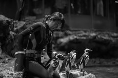 Penguin feeding (Typ250) Tags: 東京都 日本 leicam leica monochrome mmonochrom leicammonochrom summarex summarex85cm summarex85mm summarexf85cm115