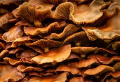 Fairy Condominium (LadyBMerritt) Tags: fungi fungus mushrooms macro nature forest woods texture