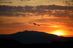 Con el sol salimos todos... (Nora077) Tags: nature sunrise birds aves naturalesa noratoth