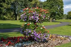 Bitts Park Carlisle (newpeter) Tags: carlisle cumbria bittspark carlislecastle carlislecathedral parks gardens flowers england uk
