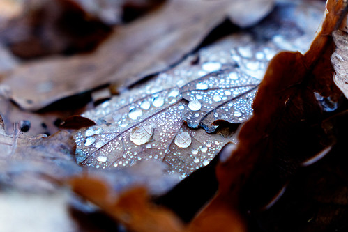Water droplets on leave...