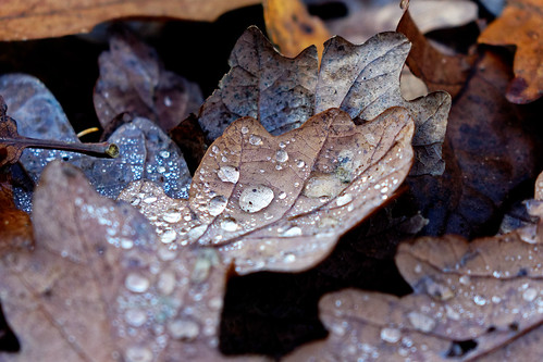 Water droplets on leaves...