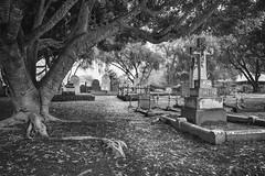 Pinjarra Cemetery (Amanda J Richards) Tags: cemetery mono tree trunk branches leaves gravestones graveyard atmosphere