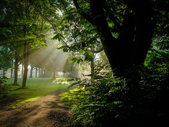 Foto (teun_van_dijk) Tags: tree trees nature sun beam light green park travel beautiful teunvandijk flevoland
