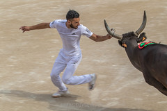 Course Camarguaise - Walid Zini (sergio_f10) Tags: canon arles coursecamarguaise canoneos7dmk2 canonef100400f4556liiisusm walidzini bull toro taureau raseteur