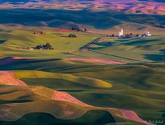 Palouse Fields from Steptoe Butte (robert_golub) Tags: farm patterns green washingtonstate washington fields steptoebutte palouse
