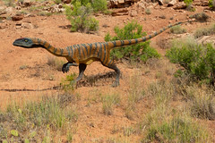 Creeping Past the Cacti ... (Ken Krach Photography) Tags: dinosaur utah