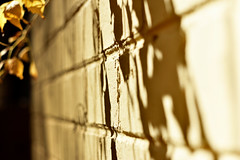 Into The Shadows (roanfourie) Tags: flickrlounge silhouettesorshadows saturdaytheme silhouettes shadows nikon d3400 dx helios 442 258 f2 yellow wall leading lines