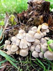 Mushrooms (msergeevna) Tags: mushrooms грибы