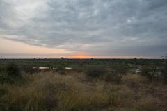 IMG_4784 (Walt vd Hoeven) Tags: safari south africa afrika mpumalanga kruger manyeleti big five bigfive pungwe bush leopard zebra elephant lion bok buffalo