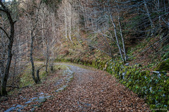 La curva (SantiMB.Photos) Tags: 2blog 2tumblr 2ig artigadelin esbòrdes valldaran valdaran pirineos pyrenees lleida camino way path sendero bosque forest otoño autumn geo:lat=4268100767 geo:lon=070715100 geotagged bordeses cataluna españa