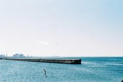 The scenery of the industrial port (しまむー) Tags: minolta α9000 af 50mm f17 kodak gold 200 横浜 菜の花 蕪島神社 列車 train yokohama kabushima