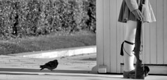 the guardians (Bim Bom) Tags: memorial pigeon soldier guard athens greece bw