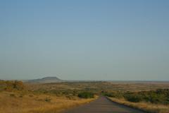 IMG_4695 (Walt vd Hoeven) Tags: safari south africa afrika mpumalanga kruger manyeleti big five bigfive pungwe bush leopard zebra elephant lion bok buffalo