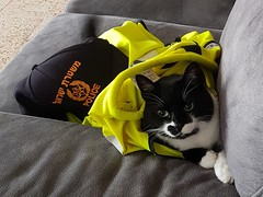 Sheba - Ready for Duty (david55king) Tags: sheba cat haifa israel חיפה ישראל