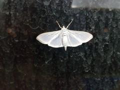 Bug on my Window (david55king) Tags: bug moth haifa israel חיפה ישראל