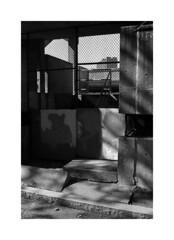 (billbostonmass) Tags: trix ddx 14ddx800min68f m6 50mm summicron epson v800 film boston massachusetts