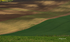 Moravian fields (MWojciechowski Foto) Tags: moravia czechia moravian landscape landschaft view layers field green greenfield colours colors colourful colour scene scenery nature natur naturaleza natural outside outdoors