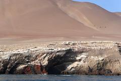 X_P1270033 (Menny Borovski) Tags: rocks avians birds marinebirds paracas peru dune sanddune peninsula