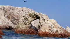 X_P1270246 (Menny Borovski) Tags: rocks avians birds marinebirds fishing ballestas paracas peru outcrop outcrops