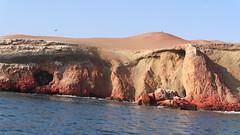 X_P1260978 (Menny Borovski) Tags: rocks avians birds marinebirds paracas peru sanddune sand peninsula coast
