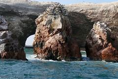 X_P1270258 (Menny Borovski) Tags: rocks avians birds marinebirds fishing ballestas paracas peru outcrops outcrop
