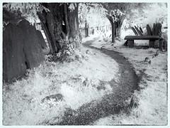 Headstones (kckelleher11) Tags: 1250mm 2019 720nm glendalough ir ireland july olympus bw em5 headstones infrared mzuiko omd path tree wicklow