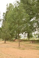 ARBOLES (27) (Elvira Lereu) Tags: paisajes árbol montaña camino naturaleza españa verano cielo landscape mountain road nature spain summer tree sky