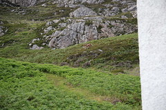 2O3A0671 (ninahale) Tags: hebrides uist scotland ronay