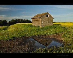 Trail on Road (Gordon Hunter) Tags: yellow canola crop field prairies shed old abandoned reflection summer morning rural country ab canada gordon hunter nikon d5000
