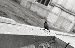 img353 (vickyhindle) Tags: blackwhite 35mmfilmphotography canoneos3 canonef50f14 ilford delta 100 ilfotecddx