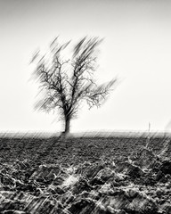 Crying for Rain... (Ody on the mount) Tags: abstrakt anlässe bäume em5ii felder fototour himmel landschaft linien mzuiko6028 omd olympus pflanzen schwäbischealb silhouette solitär unschärfe abstract bw blur fields landscape lines monochrome sw tree unscharf