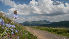 On my way (Jean-Luc Peluchon) Tags: mountain montagne fz1000 france rural campaign campagne nature papillon butterfly fleur flower ciel sky nuage cloud
