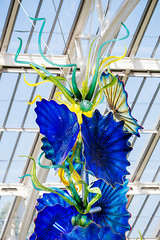 P-00514-No-148_rt (Steve Lippitt) Tags: 01000000 01015000 architecture art botanicgarden dalechihuly kewgardens temperatehouse agriculturalbuilding architectural artistry building edifice edifices fineart gardens glass glasssculpture greenhouse landscape landscaping material publicgarden sculpture statuary statue structures richmond richmonduponthames unitedkingdom exif:aperture=ƒ36 exif:focallength=106mm geo:country=unitedkingdom geo:state=richmonduponthames geo:city=richmond geo:location=kewgardenstw93ab exif:model=xh1 exif:lens=xf50140mmf28rlmoiswr geo:lon=029206666666667 camera:model=xh1 exif:make=fujifilm camera:make=fujifilm geo:lat=51479233055 exif:isospeed=200