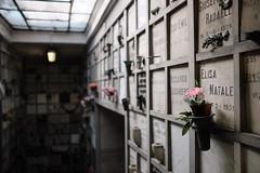 2019-07-20_monumentale_0209 (Alessandro Amodio) Tags: cimitero statue esterni tombe milano lombardia italia
