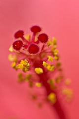Hibiscus Detail (pstenzel71) Tags: blumen natur pflanzen hibiscus hibiskus eibisch darktable flower bokeh