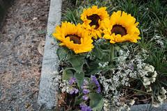 2019-07-20_monumentale_0282 (Alessandro Amodio) Tags: cimitero statue esterni tombe milano lombardia italia