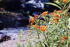Jardín Botánico Canario (Liberosis) Tags: grancanaria canarias españa spain canaryislands jardinbotanico jardin laspalmasdegrancanaria plantas vegetacion flora verde margarita cactus lavanda