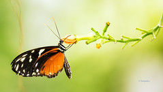 Sommer für Schmetterlinge (petra.foto busy busy busy) Tags: fotopetra canon 5dmarkiii schmetterling butterfly tiere natur